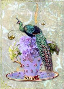 teacup_peacock